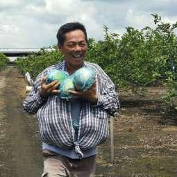 适耕庄稻田后方也有一位农夫在果园默默耕耘。